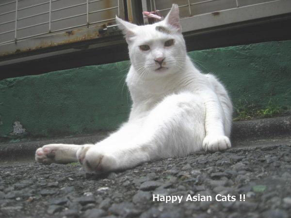 1018cats7.jpg