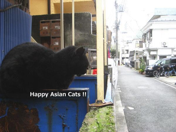 1018cats8.jpg