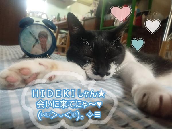 higeko.jpg